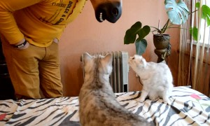 Cats React to Horse Mask