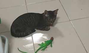 Cat Wakes Up Beside Lizard