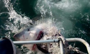 Dramatic footage shows great white's jaws inches away from cameraman's foot