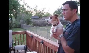 Jack Russell totally loses it whenever owner mentions squirrels