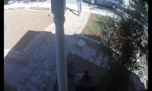 Package Thief Strikes in Broad Daylight