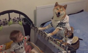 Chiko the dog and Bella the cat are responsible babysitters