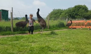 Toddler has an adorable dance party with trio of baby emus