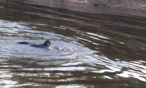 Monkey Swimming from Brazil to Bolivia