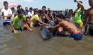 Beachgoers rescue 26ft long endangered whale stranded in shallow waters