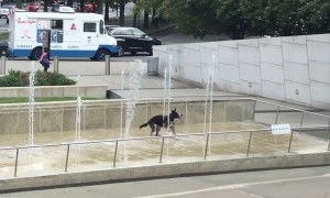 Happiest dog ever plays around in water fountain