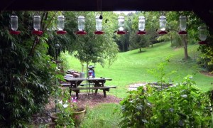 Hummingbird Feeder Frenzy