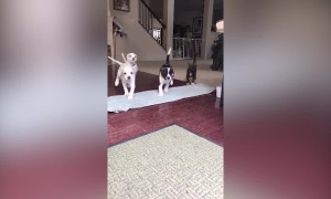 Precious Pet Families