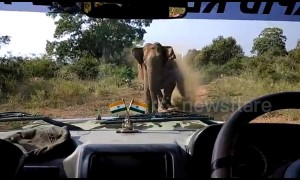Angry elephant charges forest officials in jeep