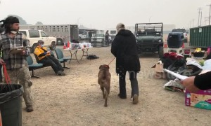 Displaced pets reunited with owners after devastating Camp Fire