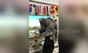 Man creates human roller-coaster for his husky