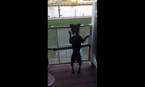 Dog has hilarious way of jumping when he gets excited