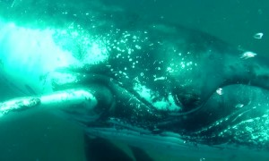 Massive whale smashes diver's camera with its fin
