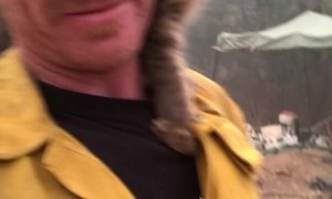 Cat Rescued From Paradise Fires Perches on Fireman