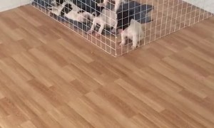 Puppies Tag Team Adorable Escape