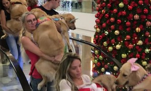 Mall Allows Dogs for a Day - Alternate Angle