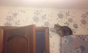 Curious Cat Fall Fail