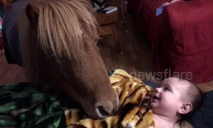 Pony tucks baby into bed for a good night's sleep