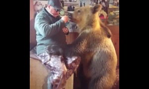 Meet Stepan, the Russian bear that loves to share treats with his owner