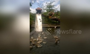 Visitors pay $2 to watch man force ducks down water slide in Vietnam