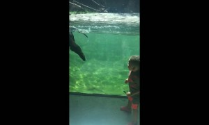 Priceless moment when otter plays with toddler at aquarium