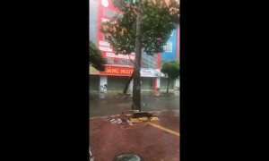 Tree crashes into street as Typhoon Usagi batters southern Vietnam