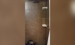 Dog Mystified by Magical Shower