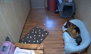 Dog Finds New Bed is a Little Lumpy