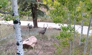 Deer Curiously Watches Dog Retrieve Paper