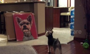 Dog barks and growls at canvas photo of himself