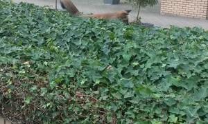 Fox Cub Wants to Play