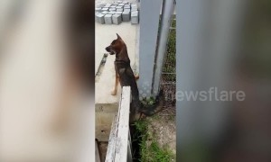 Puppy crying for help gets rescued from gap in newly built structure