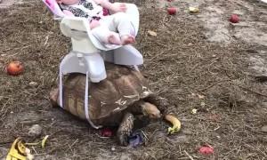 Baby Rides on Tortoise