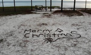 Drone gets tangled in pine tree during Christmas greeting