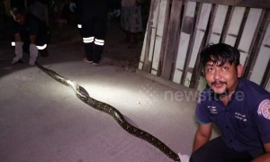 Rescuers' epic tug-of-war with python that lived under house eating family's pet cats