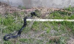 It's a Snake Eat Snake World