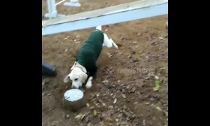 Crazy moves: dog energetically pushes bowls around agility pitch