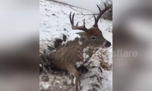 Frozen in the headlights? Man finds perfectly preserved deer in icy field