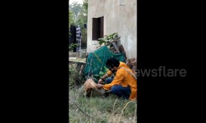 Kind volunteer rescues stray dog with plastic jar stuck on its head