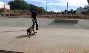 Bulldog shows off unbelievable skateboarding skills