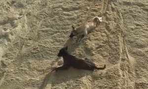 Dogs Enjoy Sand Slide Ride