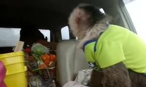 Monkey Doesn't like Travelling with Cow