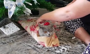 Christmas kitty gets wrapped up for 'Catmas' 2018