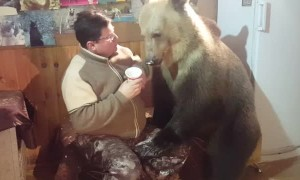 Bear Cleans Ice Cream from Mans Face