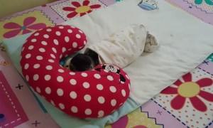 Pug Sleeps like a Baby