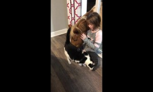 Girl, mini horse and cat share beautiful friendship
