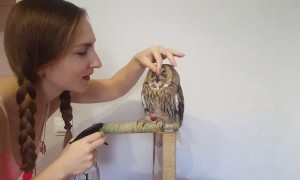 Cute Kisses from an Awesome Owl