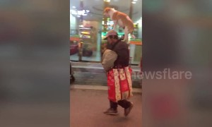 Man strolls down street in eastern Chinese city with dog balanced expertly on his head