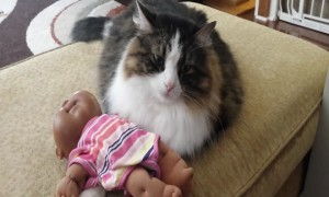 Cute Cat Snuggles with Baby Doll