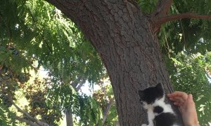 Woman Monitors Meeting Between Kitten and Squirrel